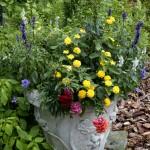 Container in Garden