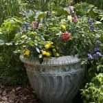 Container in Garden2