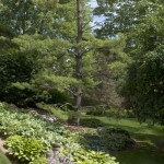 Garden with Pine Tree