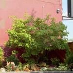 Slows Patio Garden